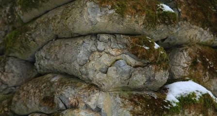 Skamieniały cement